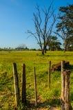 篱芭和树 免版税库存照片
