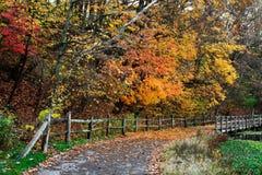 篱芭和道路在秋天 库存图片