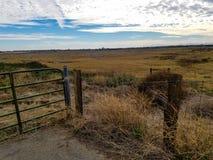 篱芭在收留母牛和山羊的草甸  免版税图库摄影