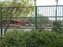 篱芭在路中部在德里 免版税图库摄影