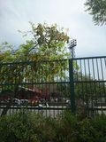 篱芭在路中部在德里 免版税库存图片