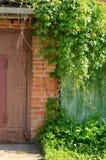 篱芭墙壁长满与与野生常春藤 免版税库存照片