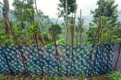 篱芭由布料制成在南亚一个农村家庭的庭院里  与高大的树木的热带风景 免版税库存图片