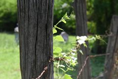 篱芭由木材和铁丝网制成 免版税库存照片