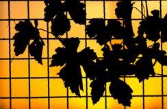 篱芭的植物在日落 免版税图库摄影