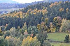 米丽娅姆森林 库存图片