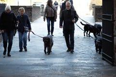 米兰,意大利- 2017年10月9日:有狗的小组人 库存照片