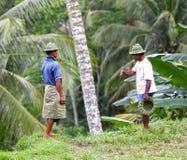 米农田劳工在巴厘岛 库存照片