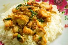 米和咖喱(混乱蓬蒿)泰国 库存图片