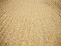 米和稻 库存图片