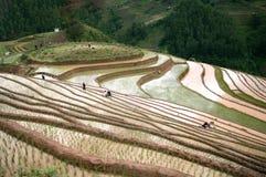 米在三议院村庄,西北,越南的大阳台领域 库存图片