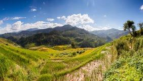 米在雨季的大阳台调遣在Mu Cang柴,安沛市,越南 米领域为移植做准备在西北越南 图库摄影
