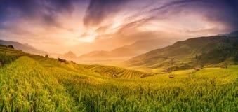 米在露台的日落, Mu张柴,安沛市,越南调遣 库存照片