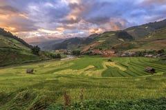 米在露台调遣在日落, Mu Cang柴, YenBai,越南 免版税库存图片