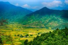 米在露台调遣Mu Cang柴, YenBai,越南 米领域在西北越南准备收获 越南风景 库存照片