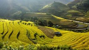 米在露台调遣Mu Cang柴, YenBai,越南 免版税库存照片