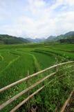 米在露台调遣Xa Nam桶盖,越南 免版税图库摄影