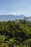 米大阳台和天空蔚蓝,Ubud,巴厘岛,印度尼西亚 美好的绿色年轻米领域,自然热带背景 米 免版税库存照片