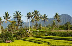 米大阳台和天空蔚蓝,Ubud,巴厘岛,印度尼西亚 美好的绿色年轻米领域,自然热带背景 米 库存照片