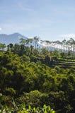 米大阳台和天空蔚蓝,Ubud,巴厘岛,印度尼西亚 美好的绿色年轻米领域,自然热带背景 米 免版税库存图片