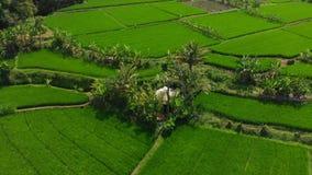 米大阳台和领域和可可椰子在巴厘岛 鸟瞰图 股票录像