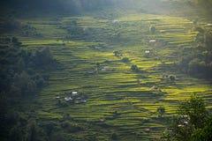 米大阳台在安纳布尔纳峰保护区域,尼泊尔 库存照片