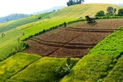 米大阳台山和棕色空间与农夫小屋 库存图片