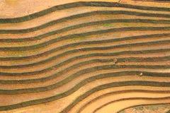 米大阳台,在山的paddi领域 免版税库存图片