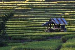米大阳台,清迈,泰国 库存照片