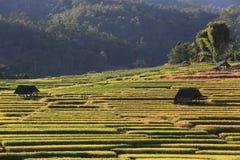 米大阳台,清迈,泰国 免版税库存照片