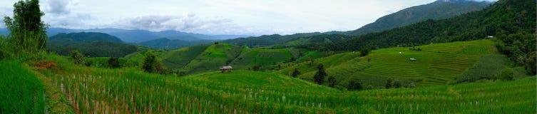 米大阳台,米领域在泰国 免版税库存照片
