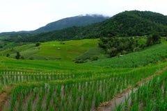 米大阳台,米领域在泰国 库存图片
