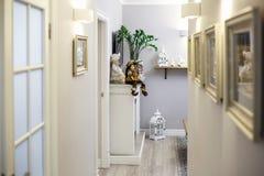 米斯克,白俄罗斯- 2019年1月:与装饰的luxure走廊内部平的公寓 库存照片