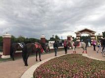 米斯克,米斯克,白俄罗斯, 2017年7月3日;城市假日,美国独立日 骑乘马和小马在入口附近对公园 免版税库存照片