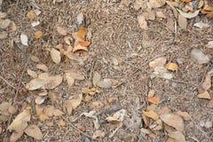米果壳干燥叶子和旱田 免版税图库摄影