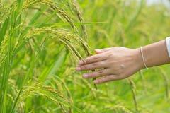 米的手感人的耳朵 免版税库存照片