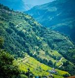 米的绿色山领域在尼泊尔 库存图片