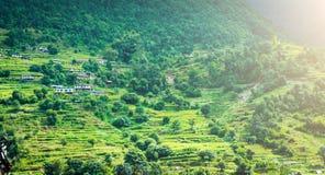 米的绿色山领域在尼泊尔 免版税库存图片