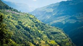 米的绿色山领域在尼泊尔 免版税库存照片