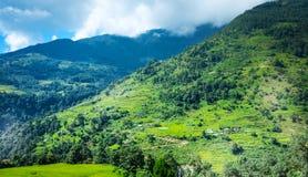 米的绿色领域在尼泊尔 免版税库存照片