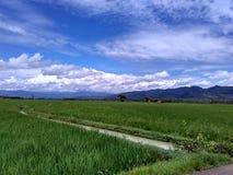 米的绿色领域有山背景和Bluesky 免版税图库摄影