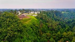 米的鸟瞰图通过密林调遣 图库摄影