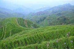 米的龙脊露台的领域 免版税图库摄影