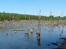 米科武夫BOROWA WIES,西里西亚,波兰这是被充斥的森林 免版税库存图片