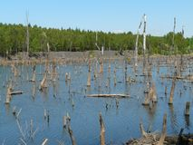 米科武夫BOROWA WIES,西里西亚,波兰这是被充斥的森林 免版税图库摄影