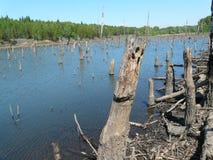 米科武夫BOROWA WIES,西里西亚,波兰这是被充斥的森林 免版税库存照片