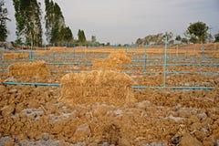 米秸杆; 覆盖树根在农业的土壤的材料 库存图片