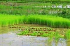 米结构树 库存照片