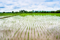 米草甸 库存图片