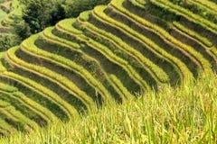 米露台在北越南 免版税库存照片